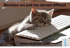 Monday - Kitten on a keyboard