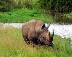 Where to See Endangered Black and White Rhinos in Kenya