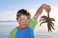 Child with Starfish royalty-free stock photo