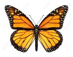 Resultado de imagen para insectos voladores animados