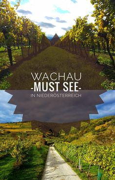 Auf meinem Blog zeige ich dir die schönste Wanderung plus kulinarische Highlights in der Wachau!