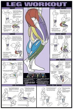 Leg Workout Professional Fitness Gym Wall Chart Poster - Fitnus Corp.