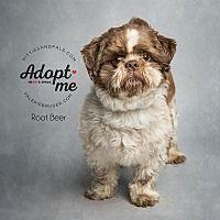 Jackson Nj Shih Tzu Meet Root Beer A Dog For Adoption Shihtzu Shih Tzu Dog Adoption Pets
