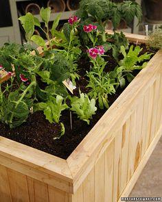 balcony vegetables (martha)