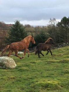 Hester, Dyr og utstyr til salgs Horses, Animals, Animales, Animaux, Animais, Horse, Words, Animal
