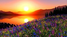 Image result for sunset and flowers