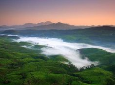 The beauty of the merging of the green hills and the mist at Munnar