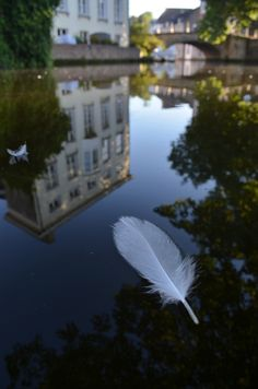 floating feathers of swans in Bruges photography by www.brunogouwy.be