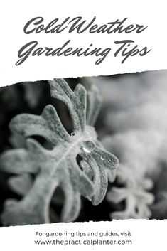 Don't let winter stand in your way of a great garden. We'll share some cold weather gardening tips to show you how to garden in the winter. #indoorgardening #gardeningtips #gardeninghacks #wintergardening Hydroponic Gardening, Organic Gardening, Container Gardening, Gardening Tips, Vegetable Gardening, Fall Vegetables, Types Of Vegetables, Growing Vegetables, Amazing Gardens