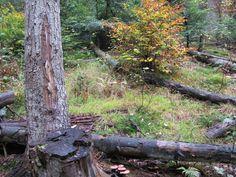 bagafarna-foto: Las pod Magurą Małastowską - wrzesień 2007 * Forest in Magura Małastowska mountain range, Beskid Niski - September 2007