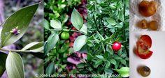 PLANTAR ÁRBOLES y arbustos: Arbustos Autóctonos http://plantararboles.blogspot.com.es/España.http://plantararboles.blogspot.com.es/2010/12/como-plantar-arboles-concretos.html
