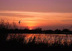 rice field sunset - Cerca con Google