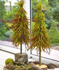Weihnachtsbaum aus Heide - DIY Anleitung - Mein schöner Garten