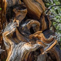 Natural deadwood - Bonsai Tonight