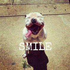 Pibble smile