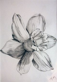daffodil drawings black and white | daffodil by tadaishar traditional art drawings landscapes scenery 2010 ...
