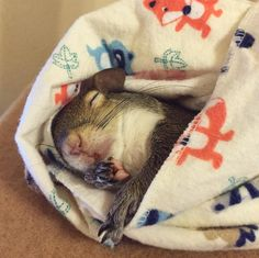 Baby Squirrel Orphaned In Hurricane Is Now Someone's Beloved Pet