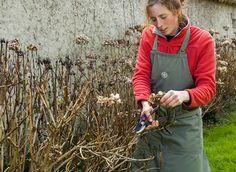 Que tailler et quand tailler au jardin : à lapproche de lhiver Rustica vous guide. Container Gardening, Gardening Tips, Garden Online, Green Tips, Potager Garden, Permaculture, Horticulture, Shrubs, Perennials