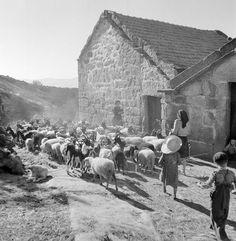 Artur Pastor : Fotografia - Beira interior, década de 50.