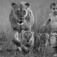 Lions and child