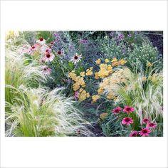 Achillea, Stipa tenuissima and Echinacea purpurea 'Twilight' - Bastin Nursey - GAP Photos -