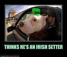 St. Patrick's Day-dog Humor