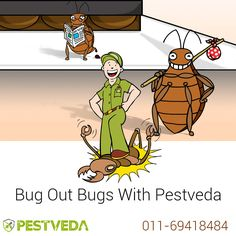 Getting Pissed of Annoying Pest ? Contact - 011-69418484 Visit- www.pestveda.com Kick out annoying bugs out of your #Home #bugcontrol #pestcontrol