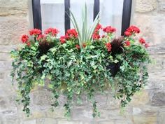 Image result for Best Geraniums for Window Boxes