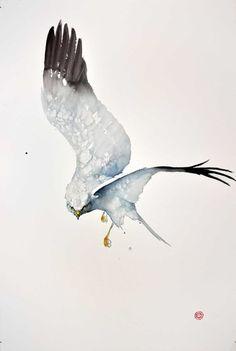 Karl Mårtens   WATERCOLOR   Northern Harrier
