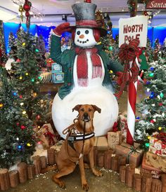 Oakley had a visit to the North Pole! #oakleythebrd  Here's an entry for @graywoof @lexiesheartbeat @blueeyeskye and @thedoxieteers contest! #ChristmasSpiritContest  Here's an entry for @harlowandsage @hollyupnorth @miniaussie_bryn and @hootandco contest! #barkthehalls2  Follow my PAWSOME partner @sheldonandkingston  Save 10% off of your entire @animalhearted order with the code: 'TUCKNOAK10'! The link to their store is in my profile!  #emwng #excellent_dogs #excellent_animals #gramoftheday…