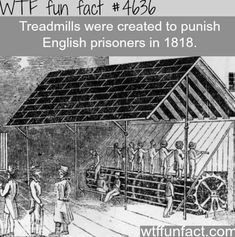 WTF Facts : funny, interesting & weird facts I believe it