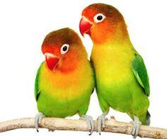 摘要:很多人選擇飼養鸚鵡的原因都是因為牠可愛會說話,可是鸚鵡並不是天生會說話喔!主人必須要有相當大的耐心和方法慢慢的訓練和教導才能讓寶貝鳥兒說出自己想聽的話。以下內容告訴你如何訓練鸚鵡學說話。  一、了解鸚鵡生活的特性  1、模仿聲音特性  模仿聲音是鸚鵡的一個特性,有的鸚鵡品種如灰鸚鵡模仿人聲的能力很強,而有的鸚鵡則喜歡模仿口哨聲。當然,也有的品種的鸚鵡模仿聲音的能力很一般。  2、趨向性和訓練...  點我看詳文:http://www.momgoe.com/article2311.html  一、了解鸚鵡生活的特性  1、模仿聲音特性  模仿聲音是鸚鵡的一個特性,有的鸚鵡品...