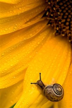 Sunny Snail by rutgerbus via dpreview #Photography #Snail #Sunflower