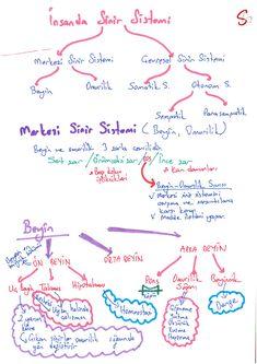 Sinir Sistemi Study Hard, School Notes, Study Motivation, Medical School, Study Tips, College Students, Biology, Chemistry, Psychology