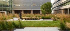 Urban Meadow. Andrea Cochran Landscape Architecture.