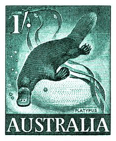Vintage 1959 Australia Platypus Postage Stamp by Retro Graphics Old Stamps, Vintage Stamps, Australian Animals, Australian Party, Australian Vintage, Platypus, Stamp Collecting, Art Pages, Retro