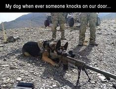 Wicked Training Your German Shepherd Dog Ideas. Mind Blowing Training Your German Shepherd Dog Ideas. Funny Dog Memes, Funny Animal Memes, Cute Funny Animals, Funny Animal Pictures, Funny Cute, Funny Dogs, Hilarious, Funny Photos, Military Jokes