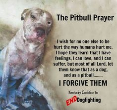 The Pitbull Prayer This breaks my heart Animal Quotes, Dog Quotes, Pit Bull Quotes, Dog Poems, True Quotes, Pitbull Facts, Stop Animal Cruelty, Dog Fighting, Pit Bull Love