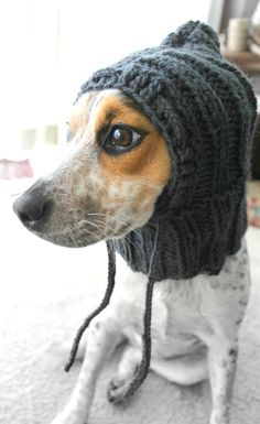 Knit dog cowl small dog hoodie pet scarf pet by FruitofPhalanges, $22.00
