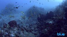 Diving Saba