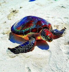 Gorgeous Colourful Turtle.