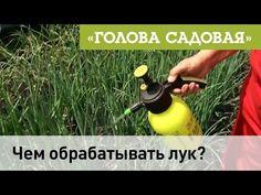 Голова садовая - Чем обрабатывать лук? - YouTube