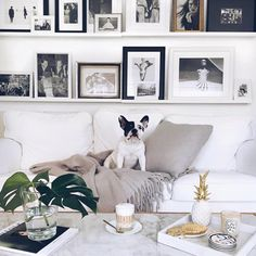 "1,151 Likes, 14 Comments - MADE.COM (@madedotcom) on Instagram: ""Morning! We're in love with this snap by @______sebastian of his adorable pup, looking very cosy on…"""