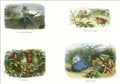 Beautiful A4 Glossy Fairies Print - 'In Fairyland' (4) - Richard Doyle 1870 by Richard Doyle http://www.amazon.co.uk/dp/B00ATUW7WU/ref=cm_sw_r_pi_dp_z7Fsvb1BD26ZM