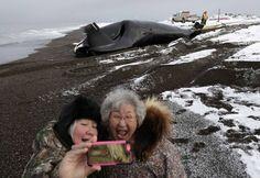 #Alaska, la #caccia «tradizionale» e il #selfie sulla carcassa della #balena