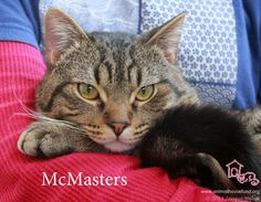 McMasters has been adopted! We rescued McMasters a few months ago and he has been SUCH a joy to have with us. Full of fun, energy, and loving excitement! He was quickly spotted by adopters and now he is happily ensconced with his wonderful new family. Just looking at his photo makes me smile, thinking about the fun we have all had with McMasters. We love you kid! Delights us to think about the many happy years you will have with your family!