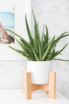 Handcrafted Wooden Plant Stand - This is adorable and I would love to have it indoors with a cacti or aloe vera plant like shown here. Potted Plants, Indoor Plants, Aloe Vera Plant Indoor, Shower Plant, Wooden Plant Stands, Decoration Plante, Bedroom Themes, Garden Planters, Diy Planters