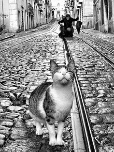 Rui PALHA :: Street model, Lisbon, Portugal, 2007