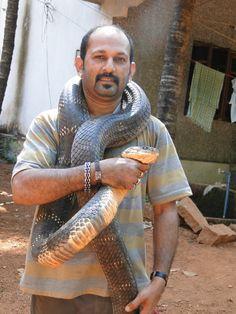 Monster King Cobra