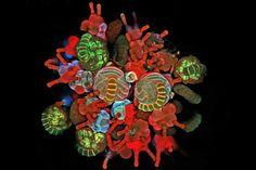kunst met tumorcellen - Google zoeken